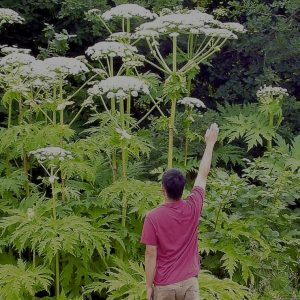 Invasive & Poisonous Plant Control